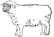 April clipart free black and white sheep freeuse stock April DeConick rug studio, red jack rugs freeuse stock
