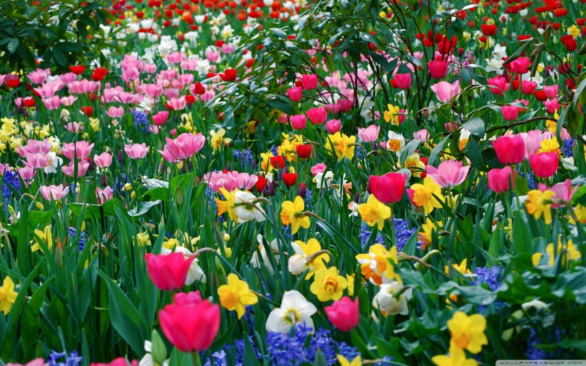 April spring backgrounds jpg free library April Flowers Desktop Wallpaper - 46 April Flowers Modern HDQ ... jpg free library