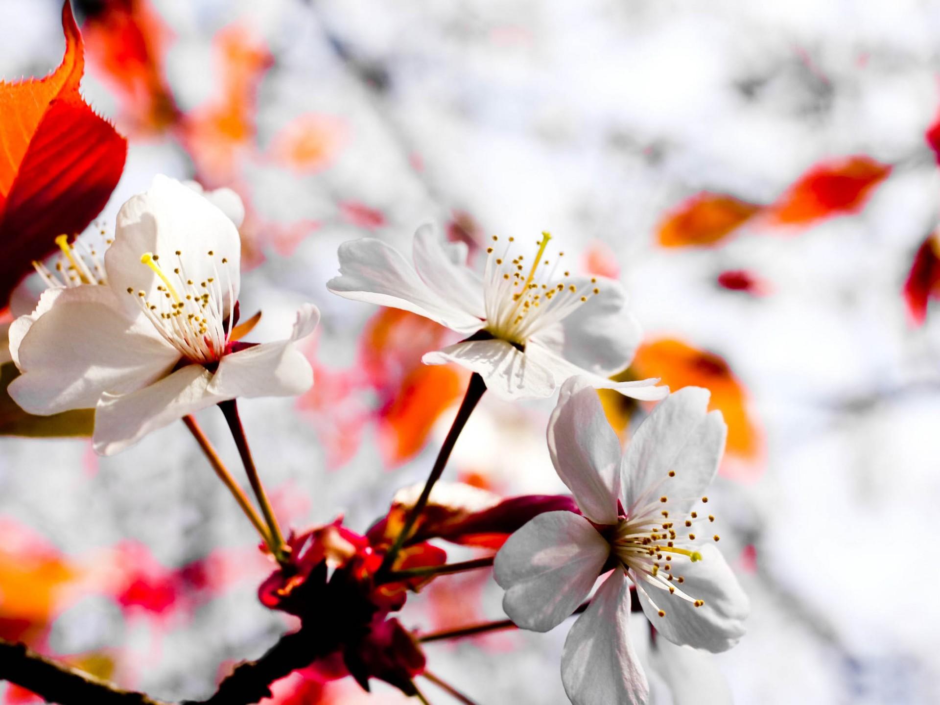 April spring backgrounds png transparent April Spring Wallpaper - WallpaperSafari png transparent