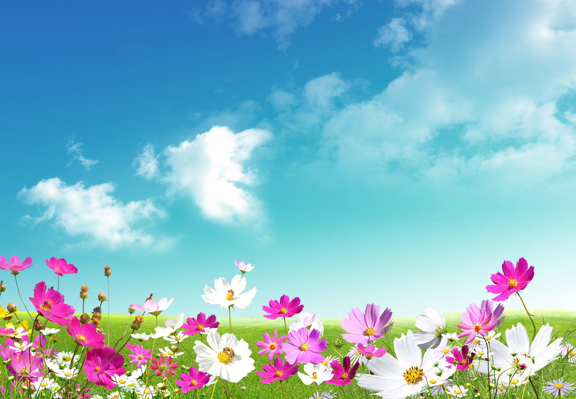 April spring backgrounds graphic download 43+ Spring Desktop Wallpaper, HD Spring Wallpapers and Photos ... graphic download