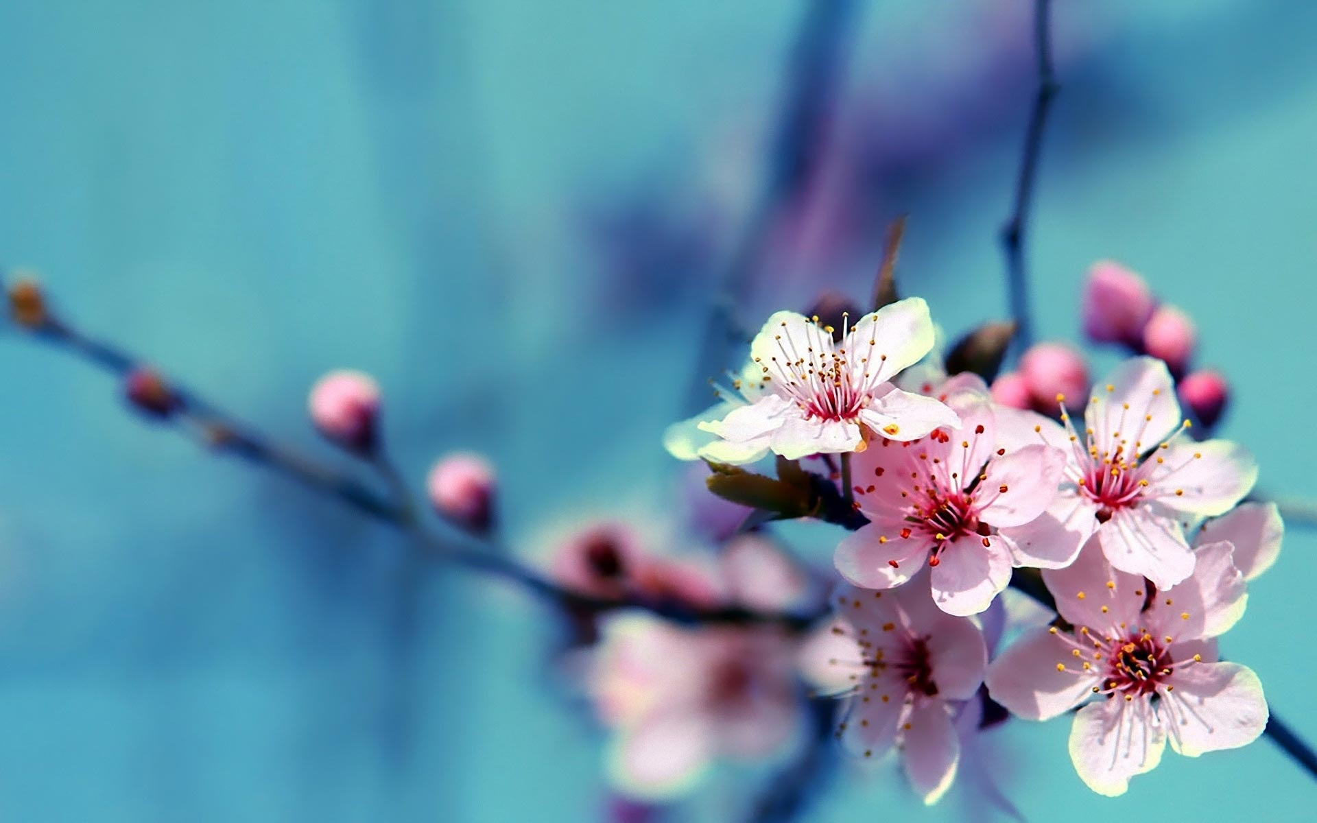 April spring backgrounds clipart library download 110 Amazing HD wallpapers of beautiful flowers   AndroidGuys clipart library download