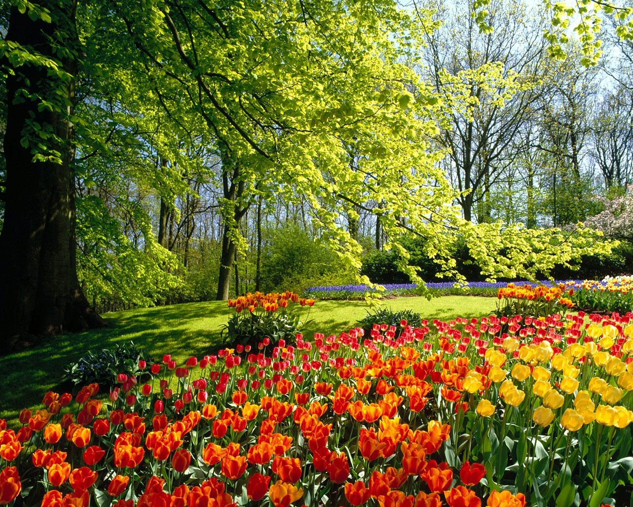 April spring backgrounds vector freeuse April Spring Wallpaper, 39 High Quality April Spring Wallpapers ... vector freeuse