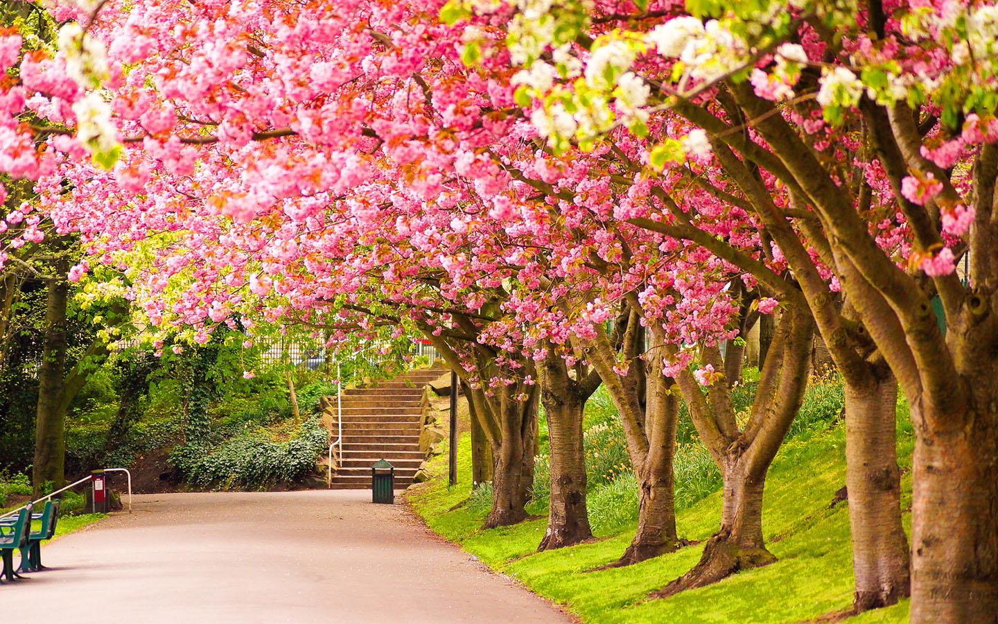 April spring backgrounds picture royalty free library April Spring Wallpaper, 39 High Quality April Spring Wallpapers ... picture royalty free library