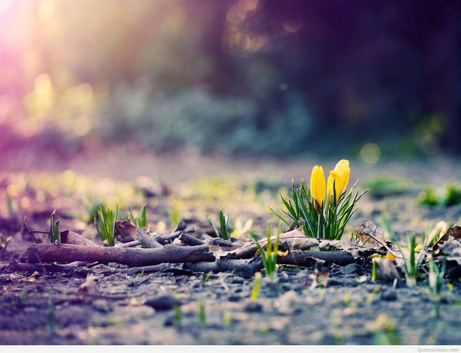 April spring backgrounds clipart freeuse download April Spring Wallpaper, 39 High Quality April Spring Wallpapers ... clipart freeuse download