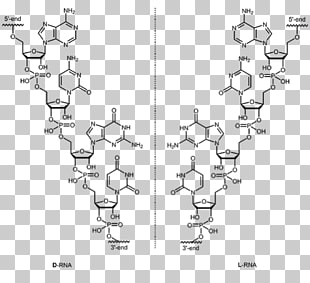 Aptamer clipart svg black and white stock 15 aptamer PNG cliparts for free download | UIHere svg black and white stock