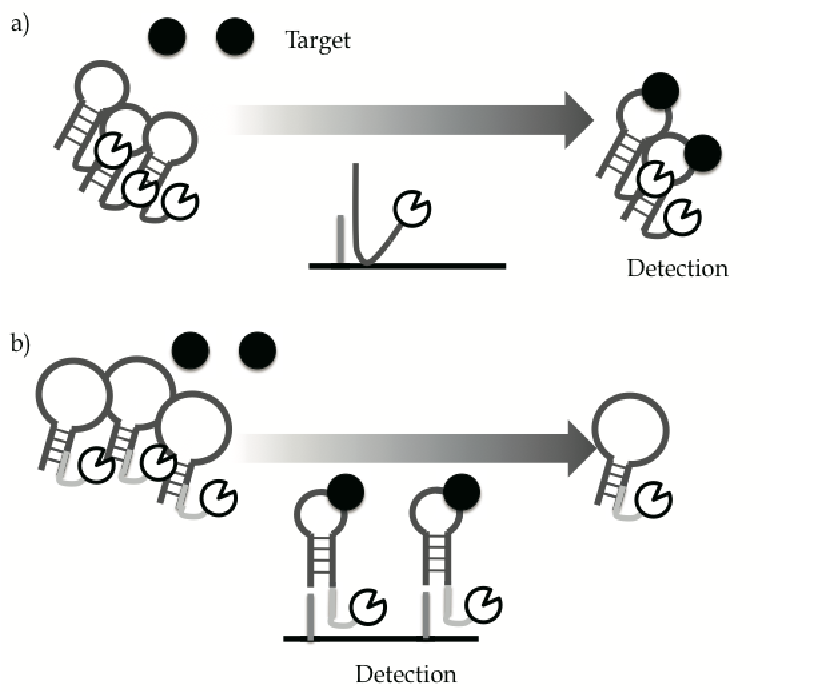 Aptamer clipart clip stock Aptamer Sensors Combined with Enzymes for Highly Sensitive Detection ... clip stock