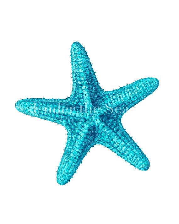 Aqua sea star clipart graphic freeuse Free Blue Starfish Cliparts, Download Free Clip Art, Free Clip Art ... graphic freeuse