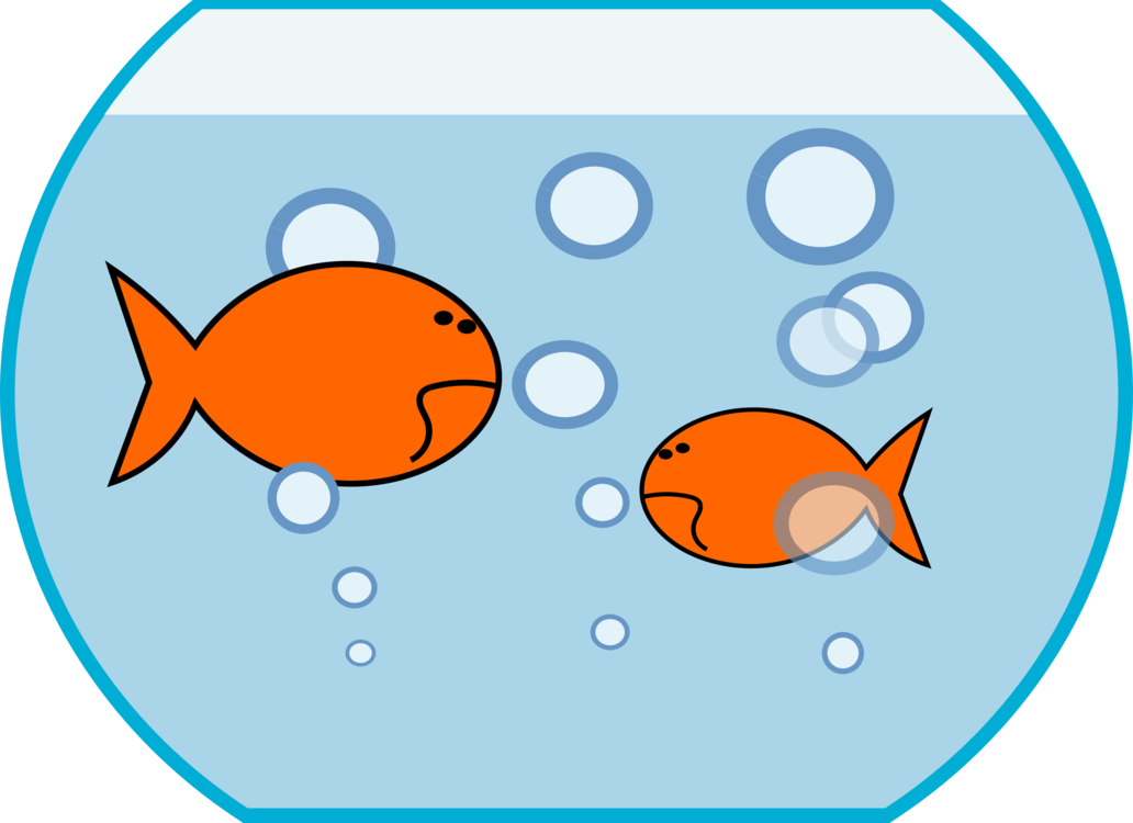 Goldfish aquarium siamese fighting. Fish kiss clipart