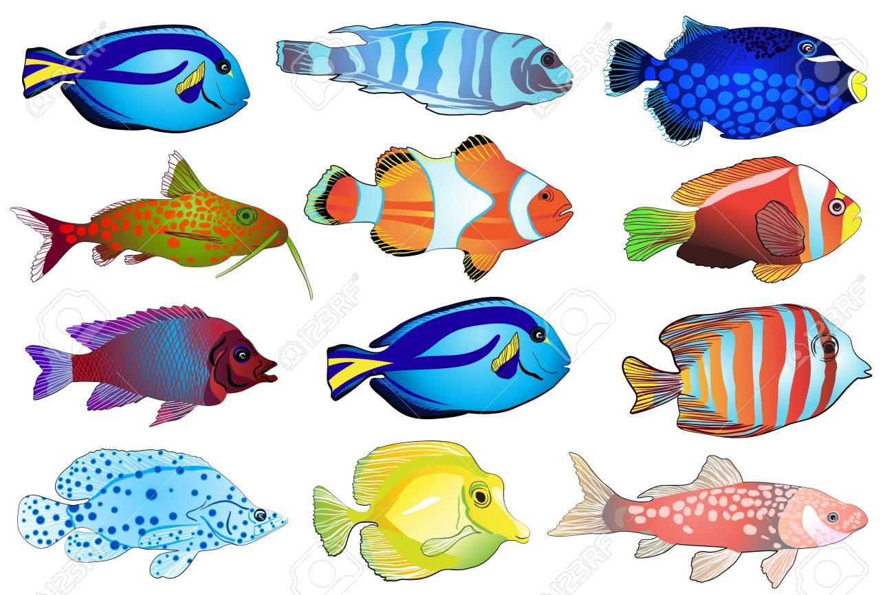 Aquarium fish images clipart banner free stock Set of aquarium fish » Clipart Station banner free stock