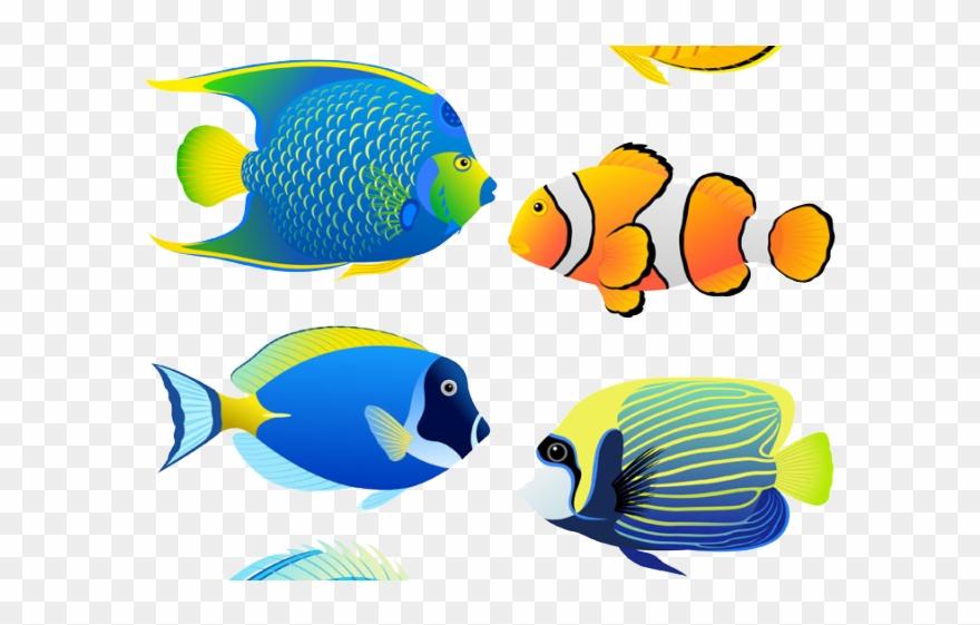 Aquarium fish images clipart png black and white library Angelfish Clipart Aquarium Fish - Coral Reef Fish Cartoon - Png ... png black and white library