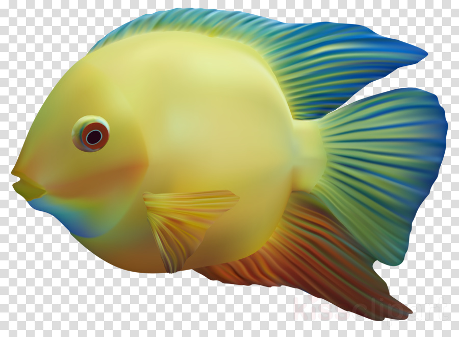 Aquarium fish images clipart picture royalty free download Fish, Fishing, transparent png image & clipart free download picture royalty free download