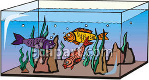 Free clipart aquarium graphic royalty free download Fish Swimming In an Aquarium - Royalty Free Clipart Picture graphic royalty free download