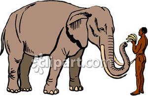 Aquarius elephant clipart clip art royalty free A Man Feeding an Elephant Bananas - Royalty Free Clipart Picture clip art royalty free