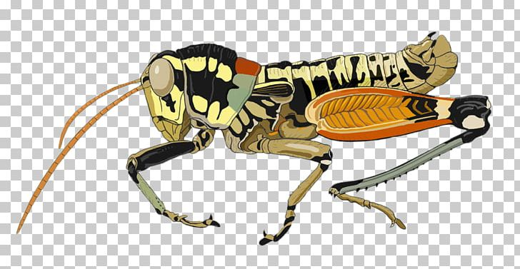 Aquatic insect clipart clipart library download Aquatic Insect Xingu River Grasshopper PNG, Clipart, Animal Figure ... clipart library download