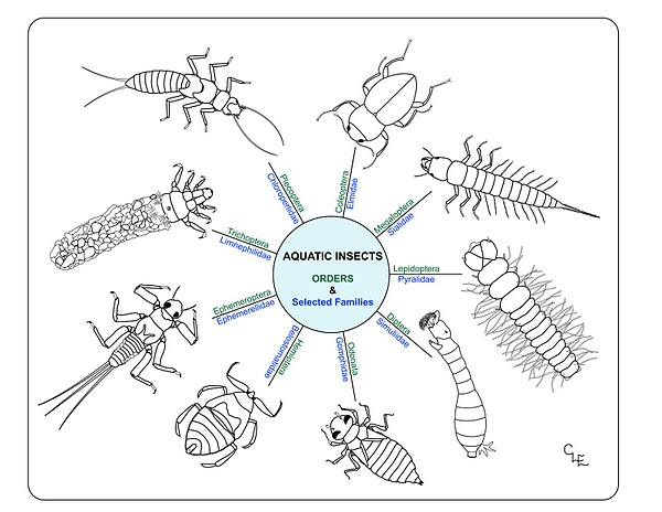 Aquatic insect clipart clipart 9 Best Photos of Printable Pond Insects - Aquatic Insect Coloring ... clipart