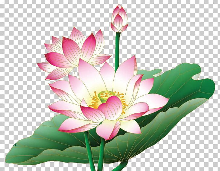 Aquatic lotus plant clipart clip transparent download Nelumbo Nucifera Egyptian Lotus Flower PNG, Clipart, Aquatic Plant ... clip transparent download