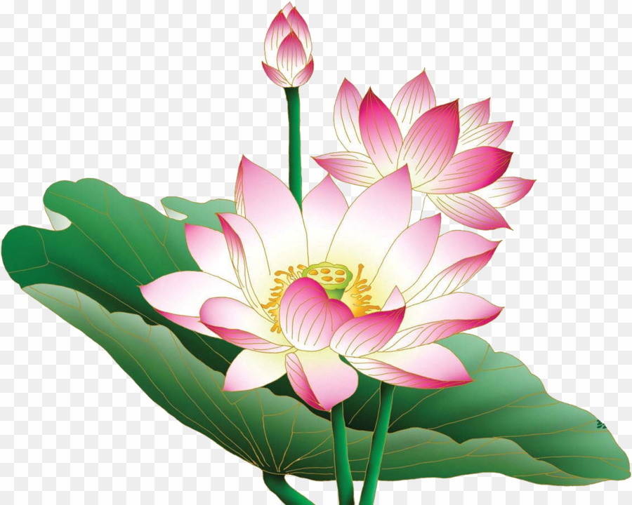 Aquatic lotus plant clipart clip freeuse download Lotus Flower PNG Nymphaea Nelumbo Flower Clipart download - 1132 ... clip freeuse download