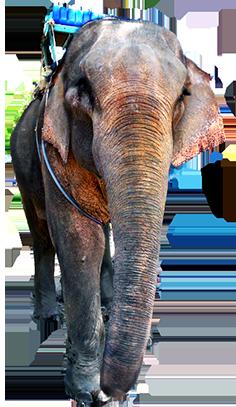 Arabian elephant clipart banner freeuse library Animal Clip Art banner freeuse library