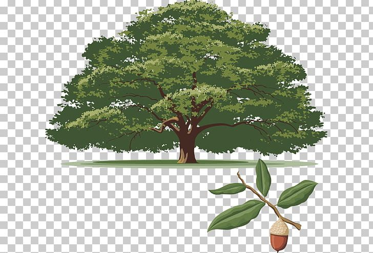 Arboretum clipart svg stock Dallas Arboretum And Botanical Garden Southern Live Oak Tree White ... svg stock