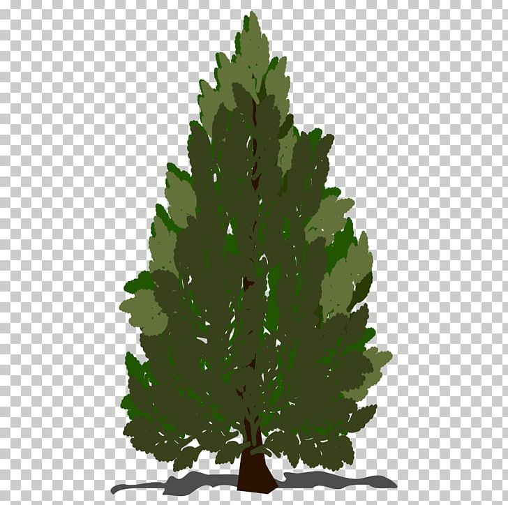 Arborvitae tree clipart svg black and white library Pinus Contorta Scots Pine Pinus Taeda Tree PNG, Clipart, Arborvitae ... svg black and white library