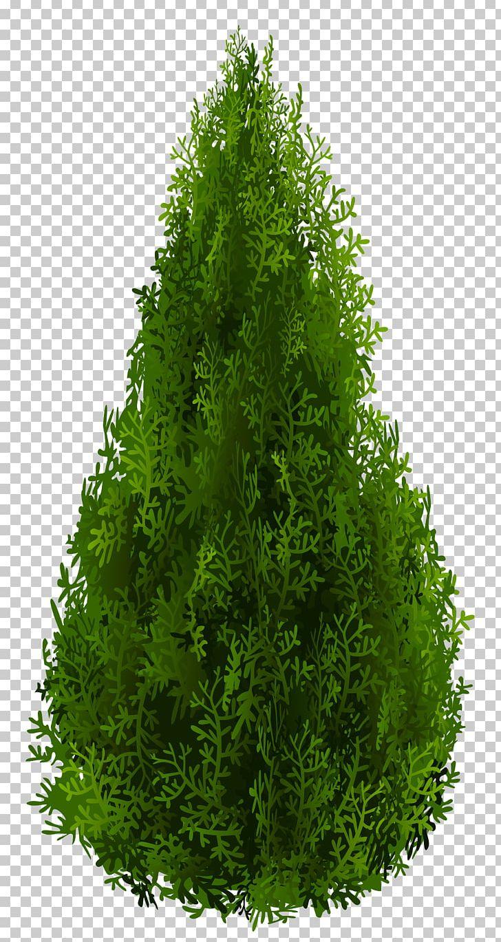 Arborvitae tree clipart black and white stock Shrub Tree Spruce PNG, Clipart, Arborvitae, Art, Bald Cypress, Biome ... black and white stock