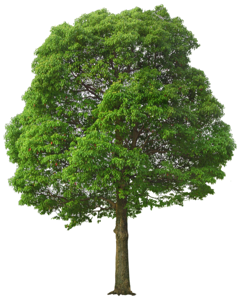 Arbre plan clipart svg library stock Pin by Mag da léna on png stromy | Tree photoshop, Green trees, Tree psd svg library stock