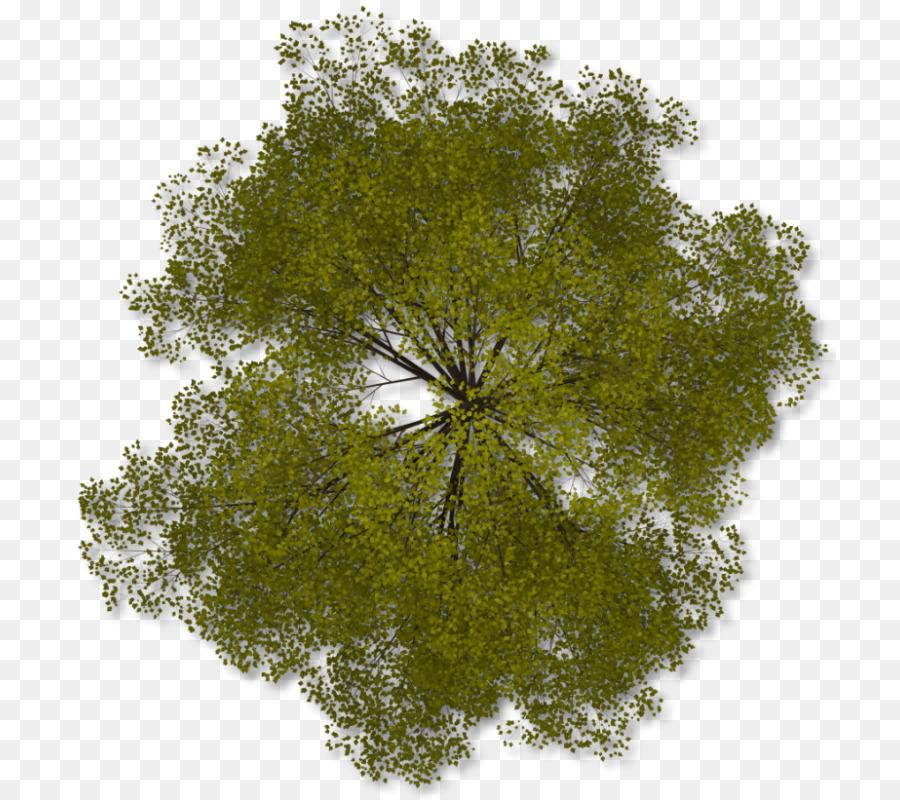 Architecture tree plan clipart clip art free Plan Tree clipart - Architecture, Tree, Plan, transparent clip art clip art free