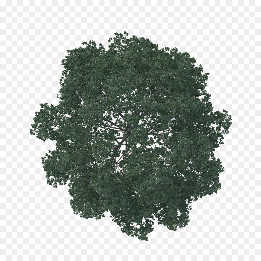 Architecture tree plan clipart graphic stock Architecture Tree clipart - Landscape, Tree, Grass, transparent clip art graphic stock