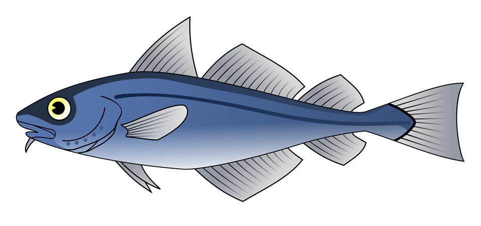 Salmon fish clipart clipart black and white library Fish | Free Stock Photo | Illustration of a blue codfish | # 10674 clipart black and white library