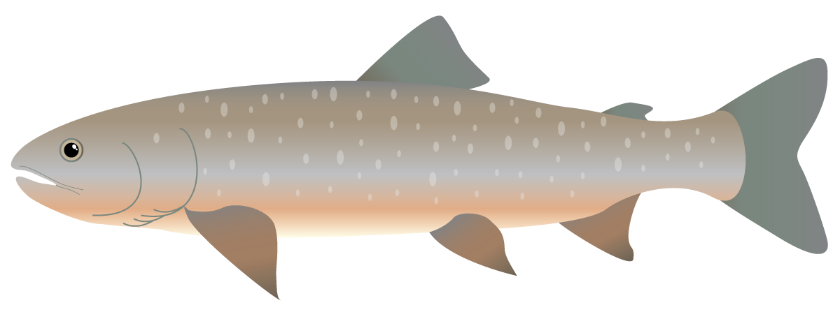 Arctic fish clipart image freeuse download Arctic Char image freeuse download