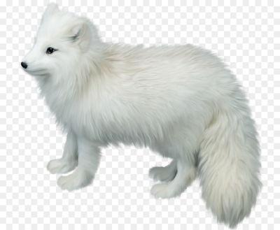 Arctic fox side view clipart