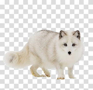 Arctic fox side view clipart banner royalty free stock Wolf Poses , gray fox transparent background PNG clipart | HiClipart banner royalty free stock