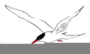 Arctic tern clipart