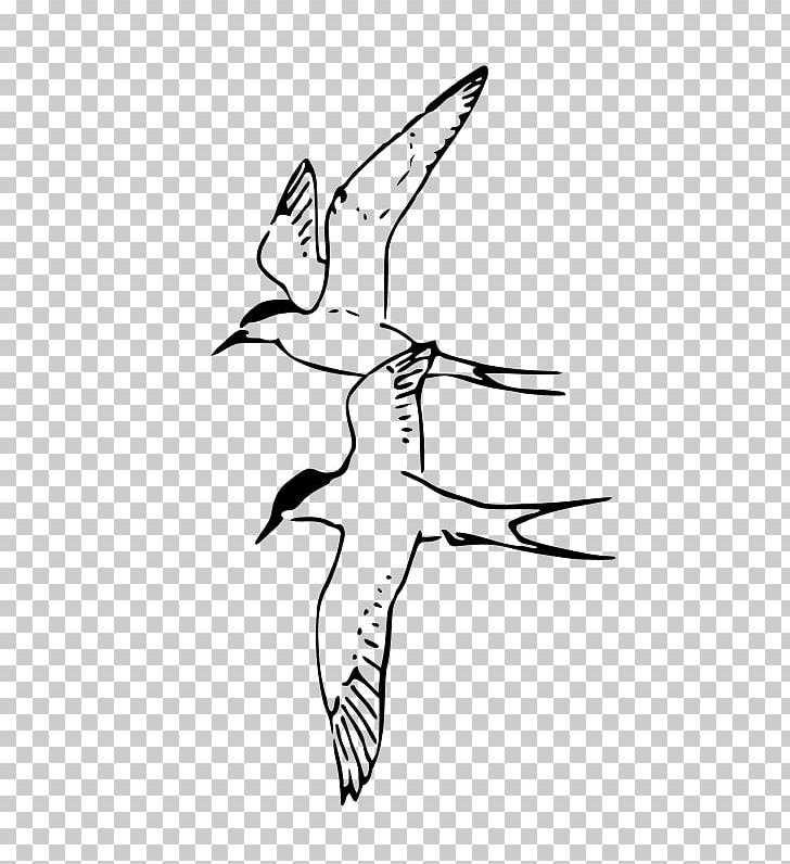 Arctic tern clipart png download Arctic Tern PNG, Clipart, Animals, Arctic, Arctic Fox, Arctic Tern ... png download