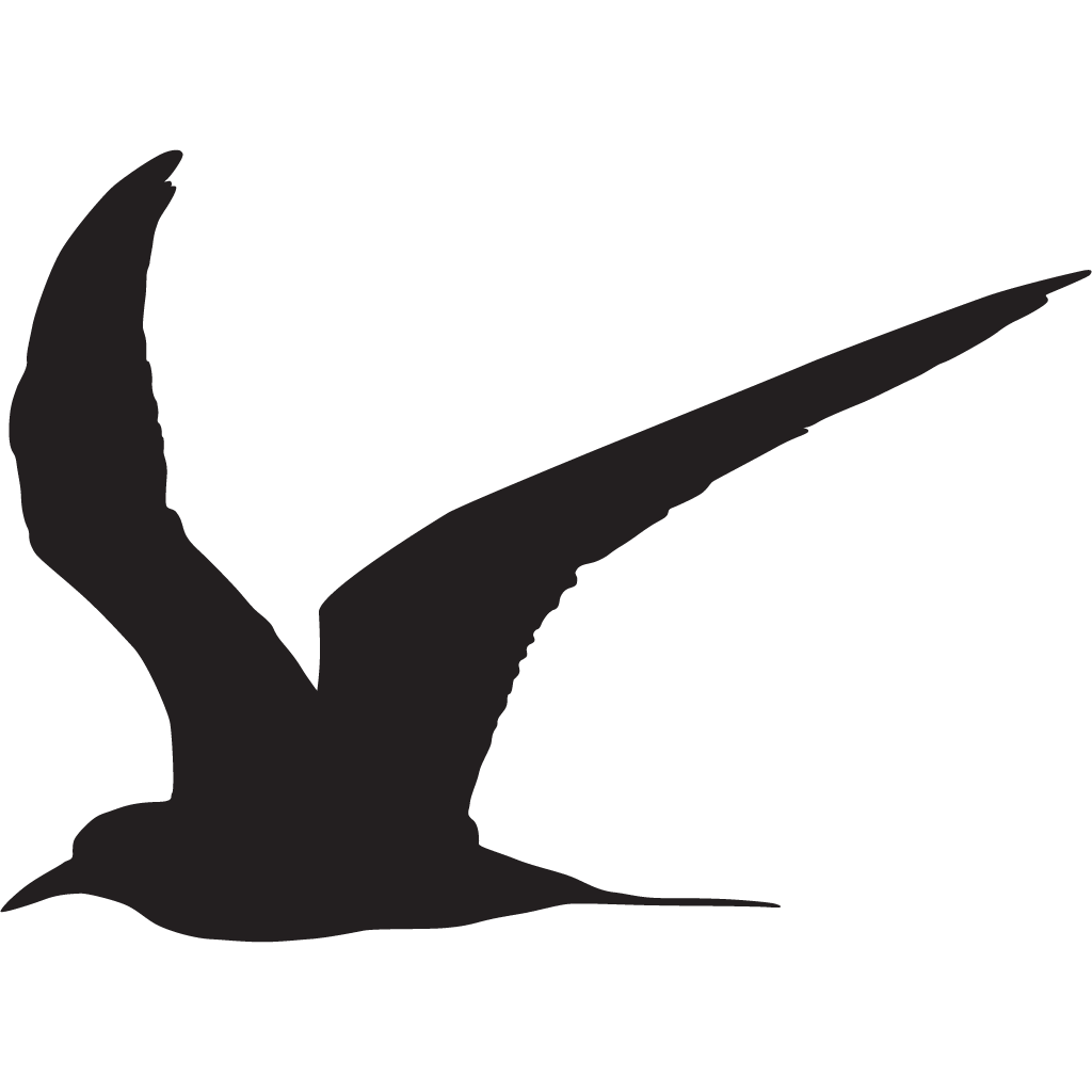 Arctic tern clipart clipart black and white stock Arctic Tern Overview, All About Birds, Cornell Lab of Ornithology clipart black and white stock