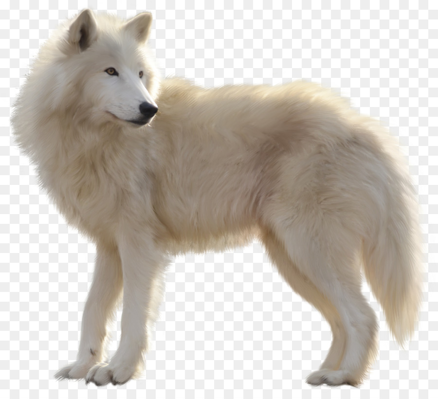 Arctic wolves clipart picture free Wolf Cartoon clipart - Dog, transparent clip art picture free