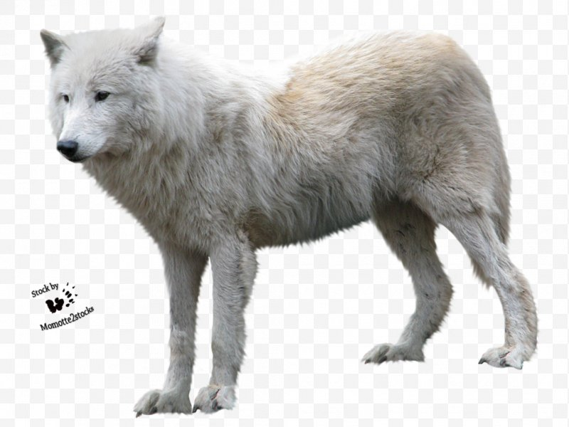 Arctic wolves clipart graphic library stock Arctic Wolf Clip Art, PNG, 1032x774px, Dog, Alaskan Tundra Wolf ... graphic library stock