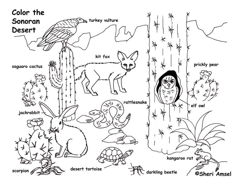 Arizona desert critters clipart clip free download desert animals coloring pages | Only Coloring Pages | Desert animals ... clip free download