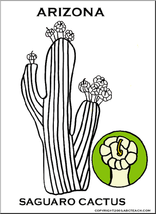 Arizona state with cactus clipart image royalty free download Arizona: State Flower - Saguaro Cactus | abcteach | Western ... image royalty free download