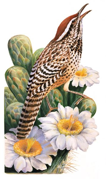 Arizona state with cactus clipart png library stock Arizona State Bird: Cactus Wren and Saguaro Cactus Blossom | 50 ... png library stock
