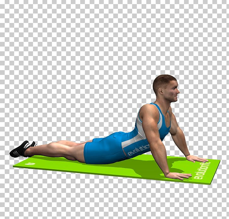 Arm stretch on wall clipart jpg free download Abdomen Stretching Exercise Rectus Abdominis Muscle Human Leg PNG ... jpg free download