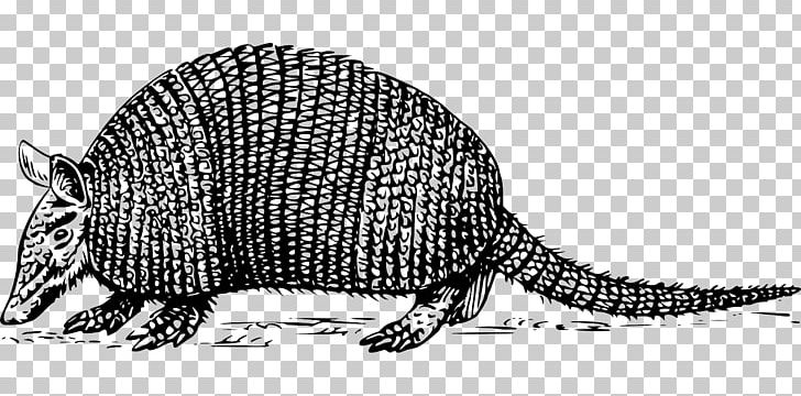 Armadillo clipart black and white png download Armadillo PNG, Clipart, Animal, Animal Figure, Armadillo, Beaver ... png download