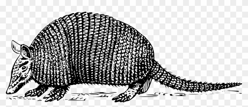 Armadillo clipart png svg black and white library Armadillo Anteater Sloth Drawing Computer Icons - Armadillo Clipart ... svg black and white library