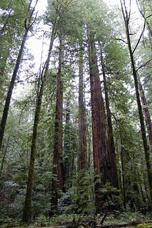 Armstrong redwood clipart svg stock Guerneville – Travel guide at Wikivoyage svg stock