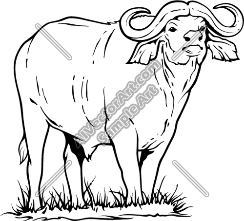 Army water buffalo clipart clip download Water Buffalo Standing in Grass | big 5 | Water buffalo, Animal ... clip download