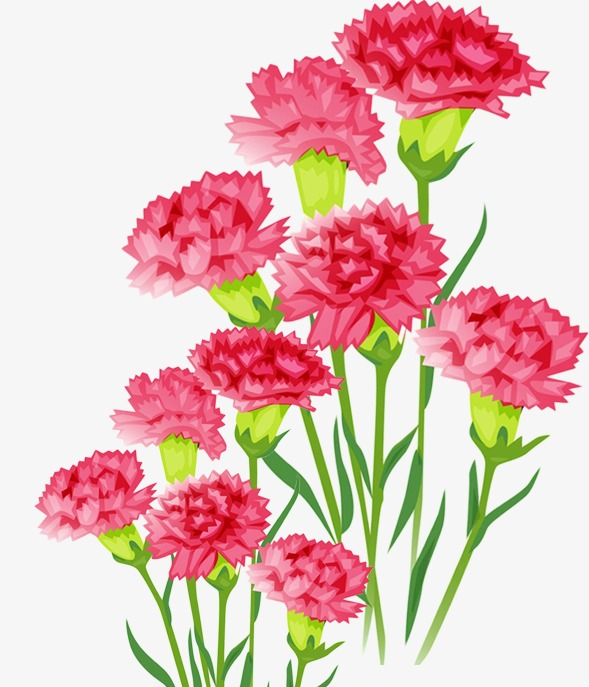 Arnations clipart clipart royalty free Carnations clipart 3 » Clipart Station clipart royalty free