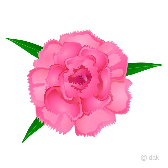 Arnations clipart clip art transparent download Carnation Flower Clipart Free Picture|Illustoon clip art transparent download
