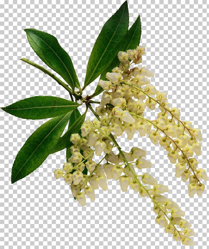Aromaterapia clipart image transparent library AROMATERAPIA: O USO TERAPEUTICO DAS ERVAS Flower Floral design ... image transparent library