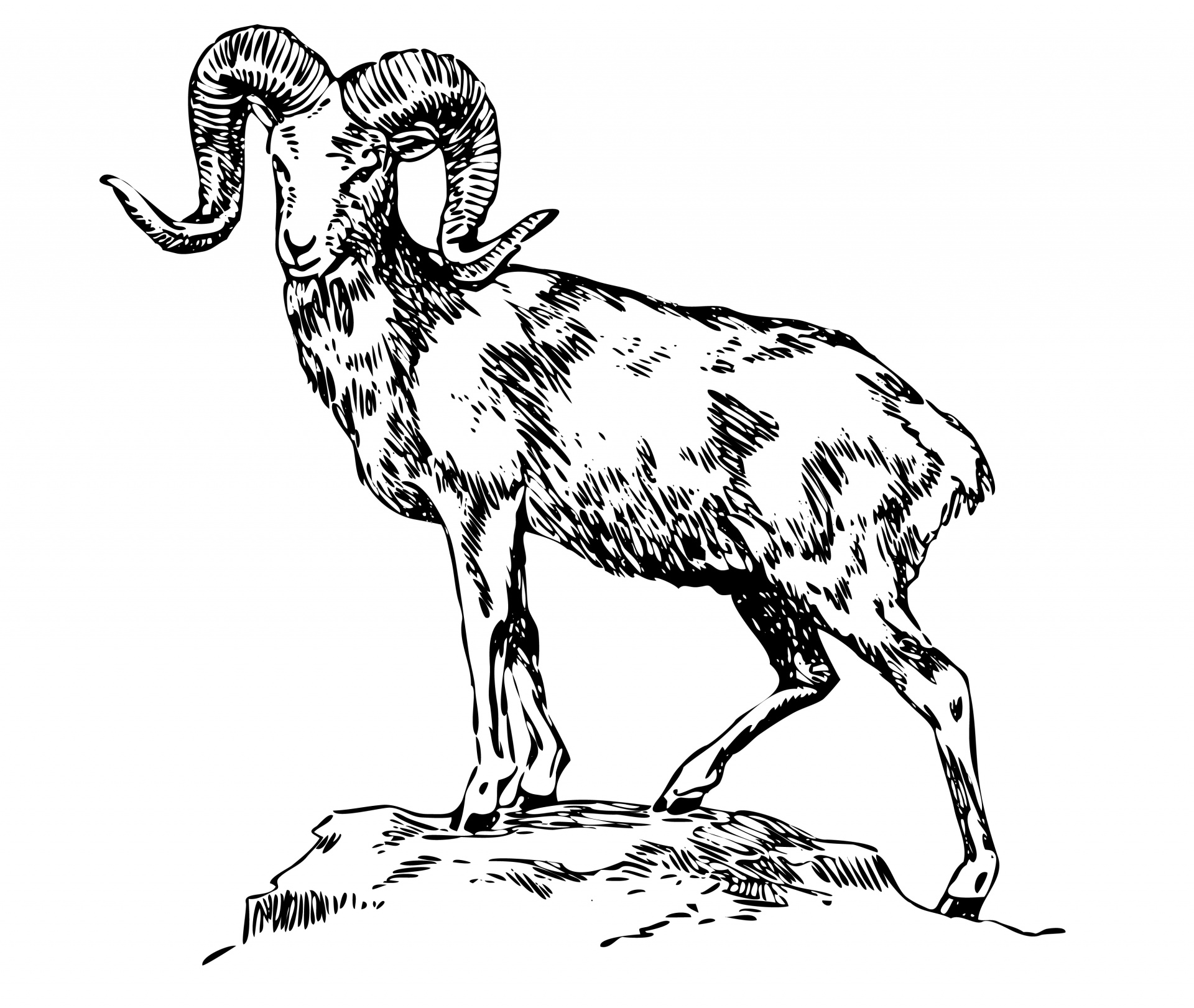 Artistic ram head clipart black and white clip royalty free Mountain Sheep Illustration Clipart Free Stock Photo - Public ... clip royalty free