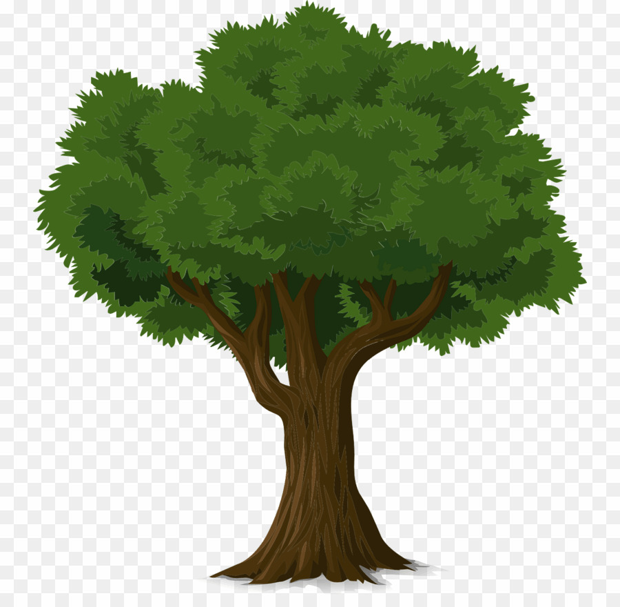Arvore clipart png picture free Sombra De árvore PNG Tree Clipart download - 804 * 869 - Free ... picture free